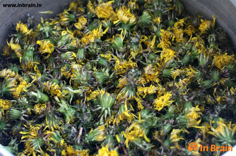 pieneņu ziedi
