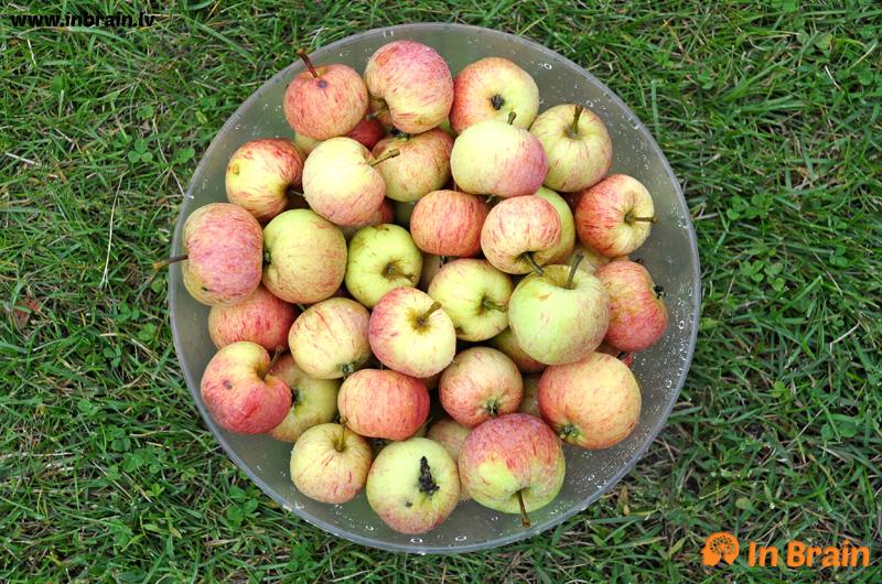 cukuriņi āboli