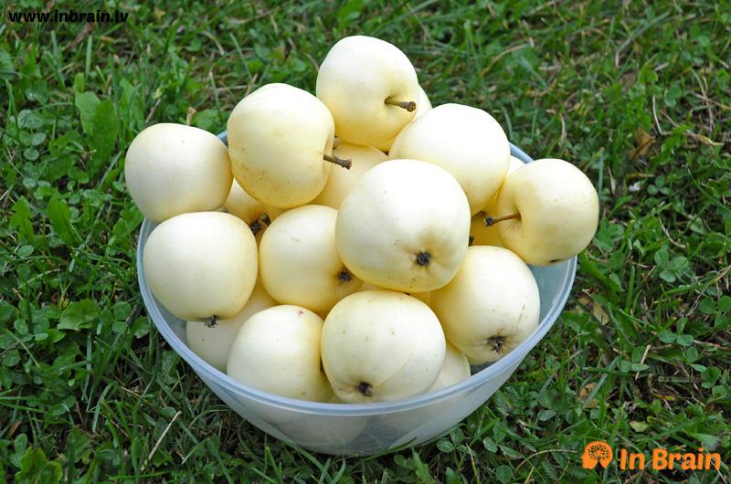 baltie dzidrie āboli