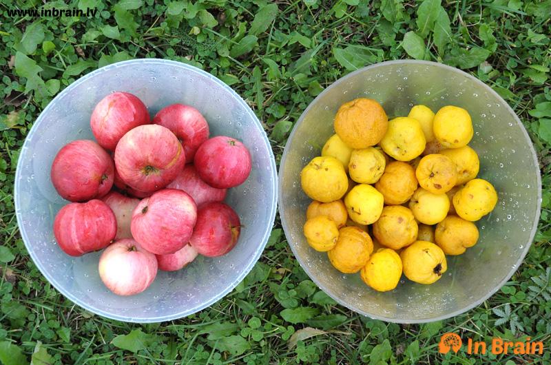 āboli un cidonijas
